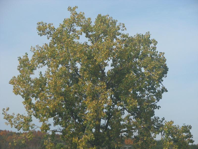 Fall pics 2008 014.jpg