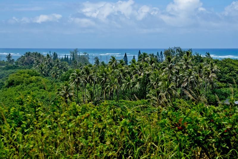 Journey into Oahu Photograph 92