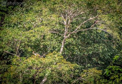 20140120_AMAZON_JUNGLE (56 of 72)
