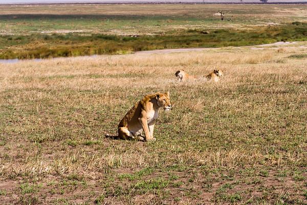 Serengeti #3