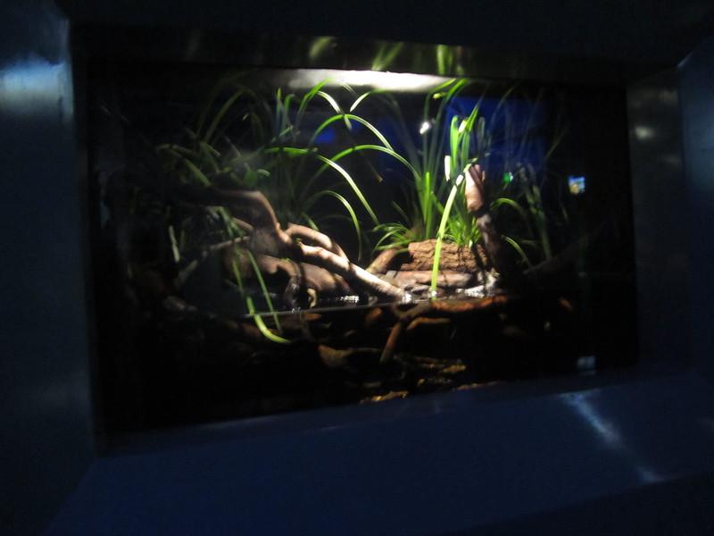 Sydney - Sydney Aquarium-42.JPG