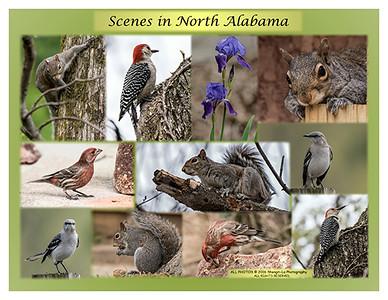 Scenes in North Alabama