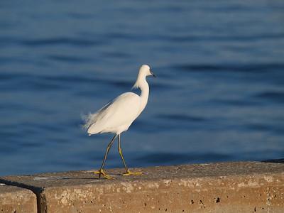 2012 Pier birds Dec, 2012