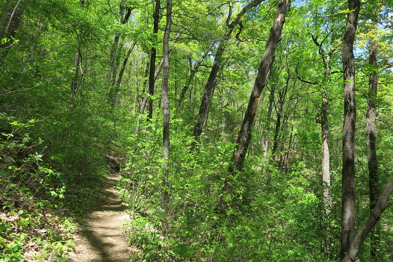 Pinnacle Mountain Trail - 2,050'