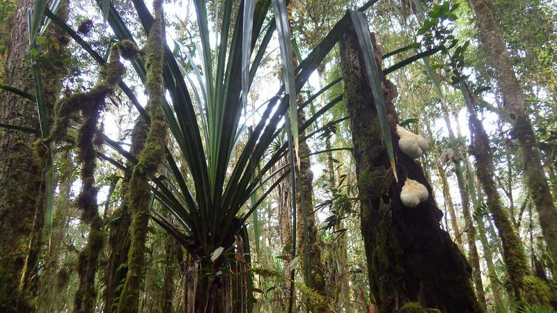 Interesting flora in Papua jungle 1