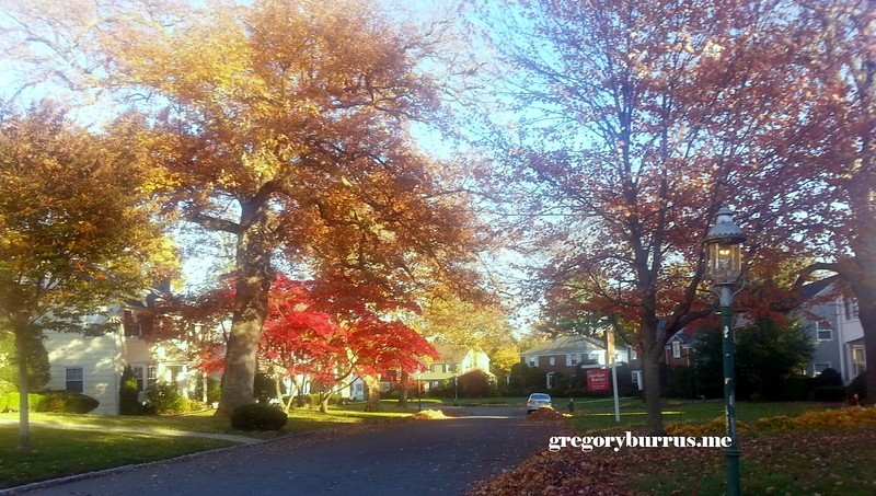 20141110 Fall This Mornings Walk Around Time 0022.jpg