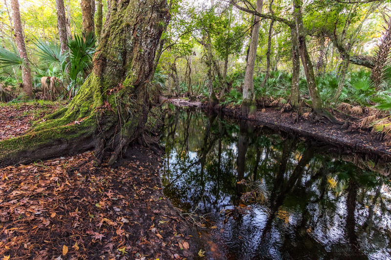 Blackwater stream