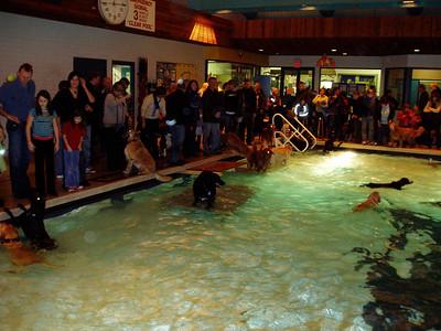 12.03.06 Dogface Swimming