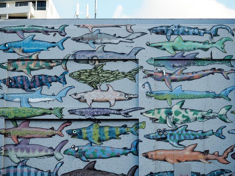 Shark mural in Wellington, New Zealand