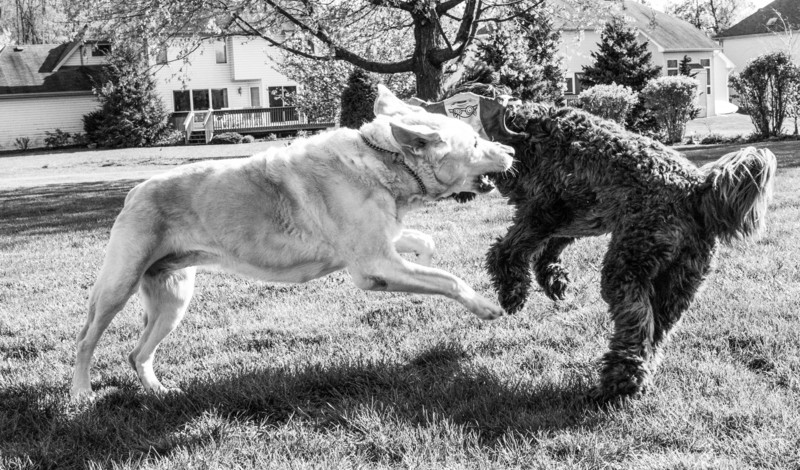 dogs and frisbee-00230-Edit.jpg