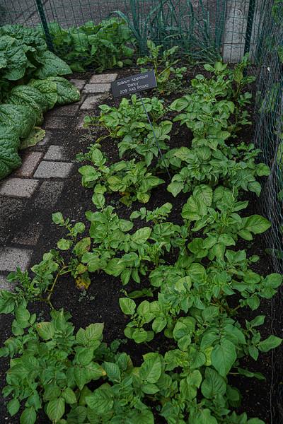 Arboretum, July Harvest-43.JPG