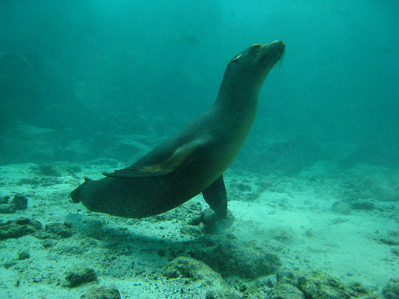 Diving in the Galapagos (290 of 392)