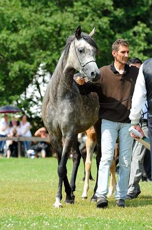 Foal class colts