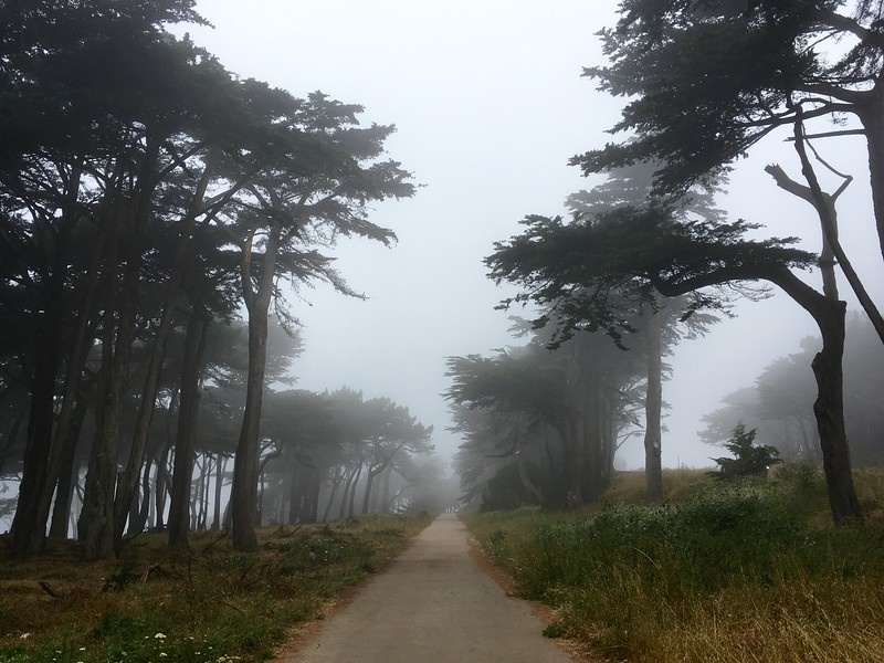 Foggy trails at Land's End