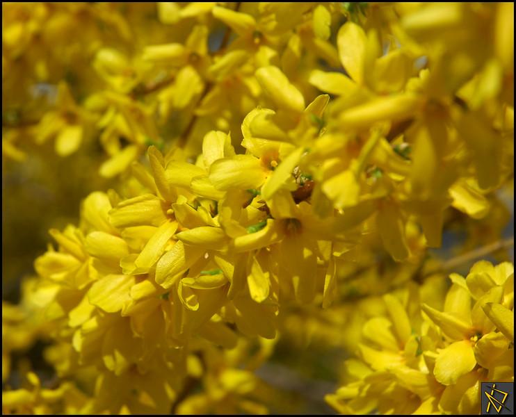 SpringDay8.jpg