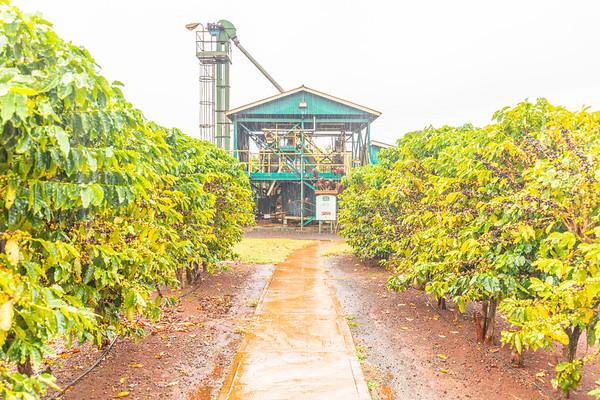 Kauai Coffee Estate