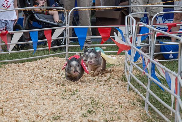 Pig -Races