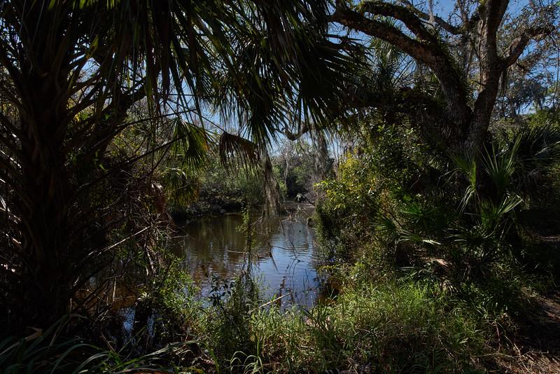 Little Manatee River 2.jpg