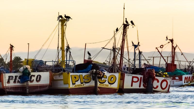 Paracas Ballastas -3779.jpg