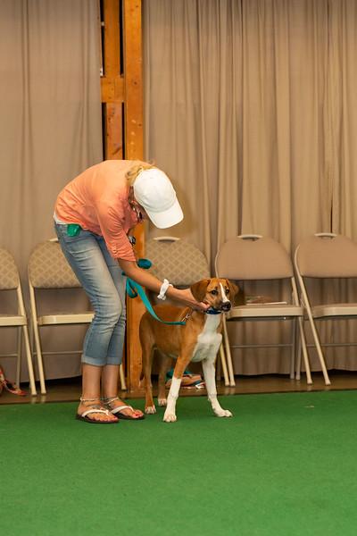 on Command dog Training June 2019-5163.jpg