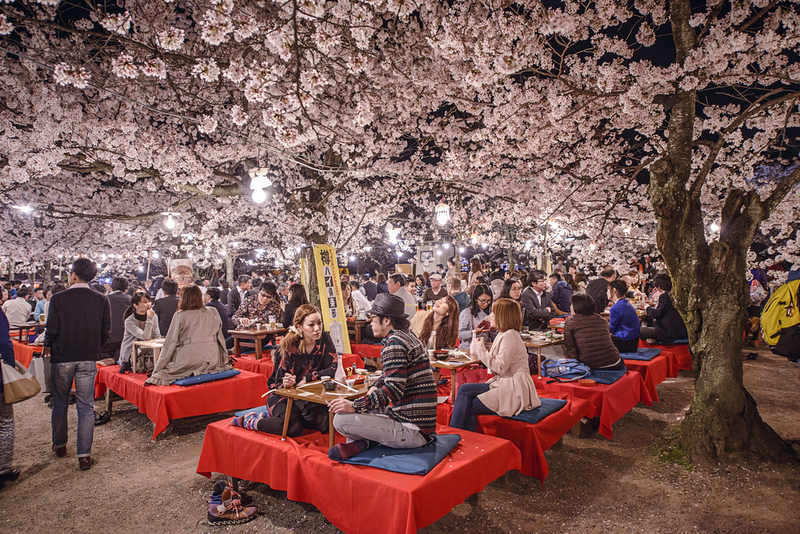 A Hanami festival in Maruyama Park. Editorial credit: Sean Pavone / Shutterstock.com