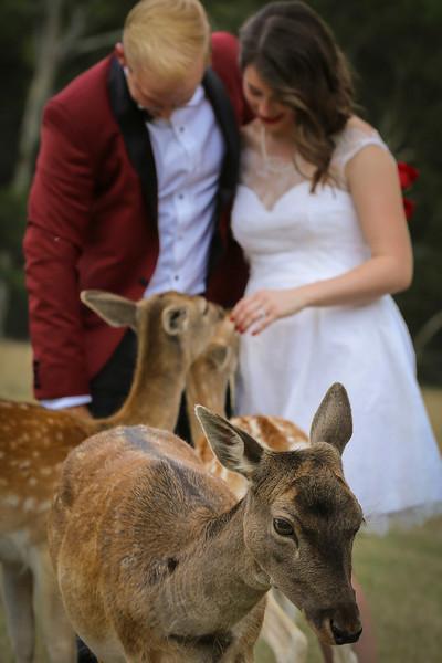 Weddings, Engagements, Elopements