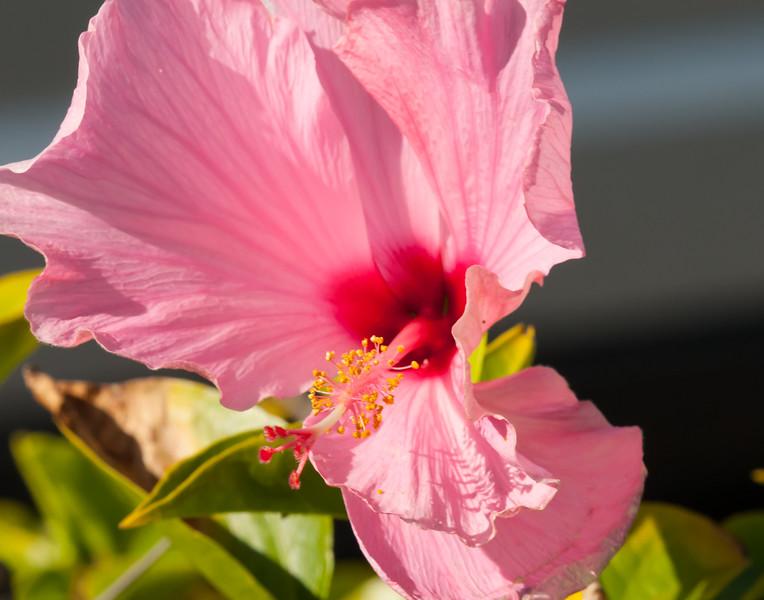 Sea Watch Flower 1