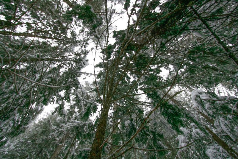 winter 2013-0304.jpg