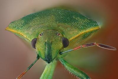 Bugs, 2017