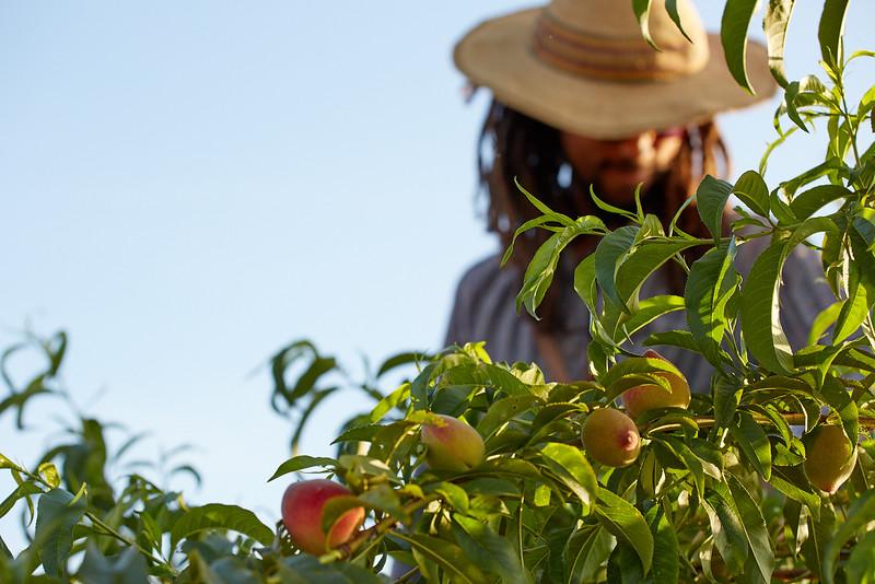 Fruitstitue058.jpg
