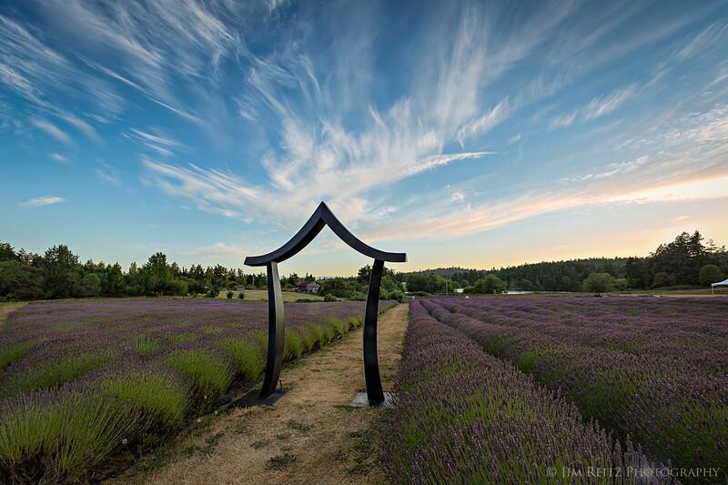 Lavender fields on San Juan Island, Washington