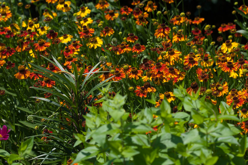2009 06 30_NY Botanical Gardens_0741.jpg