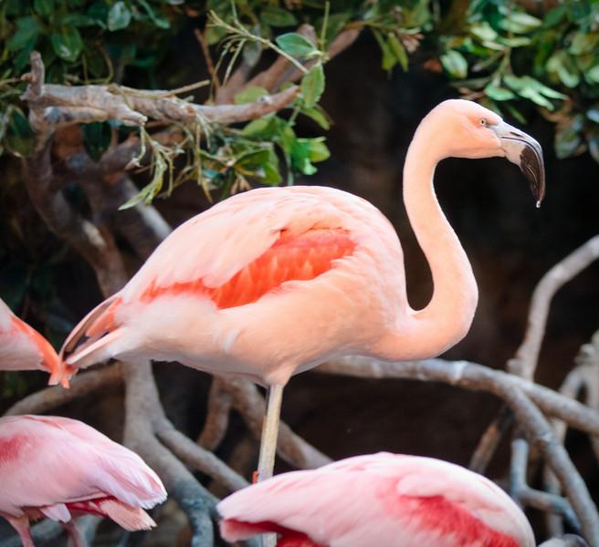 Monterey Bay Aquarium-2471.jpg