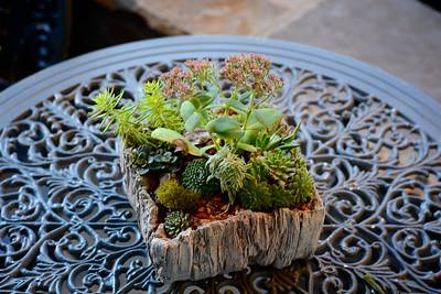 Cindy's Plants