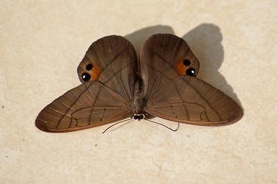 Moth, Unidentified Moths