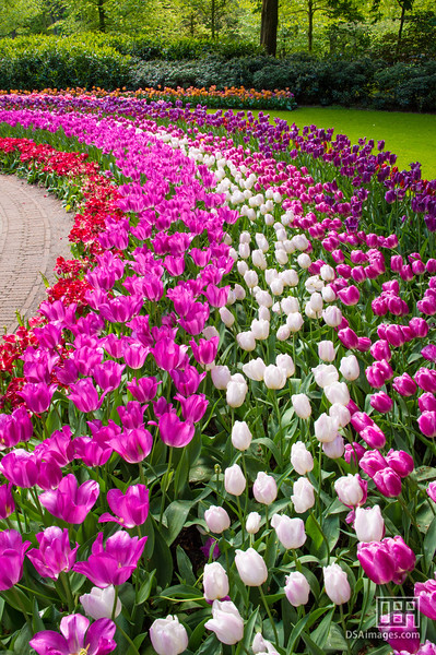 Tulips at Keukenhof Gardens