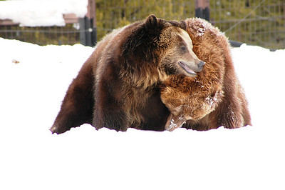 Yellowstone Photos