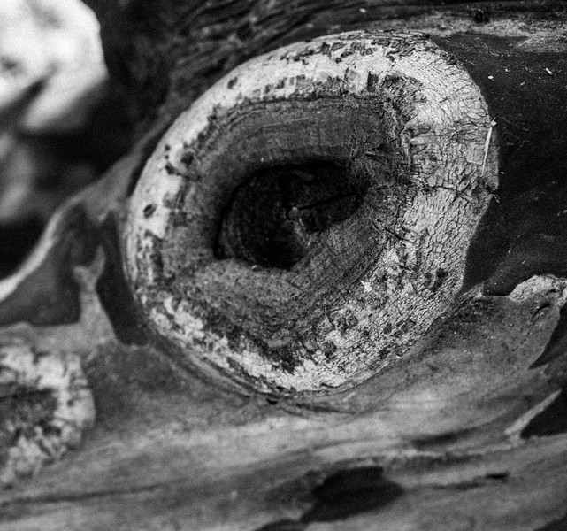 Here trees have eyes