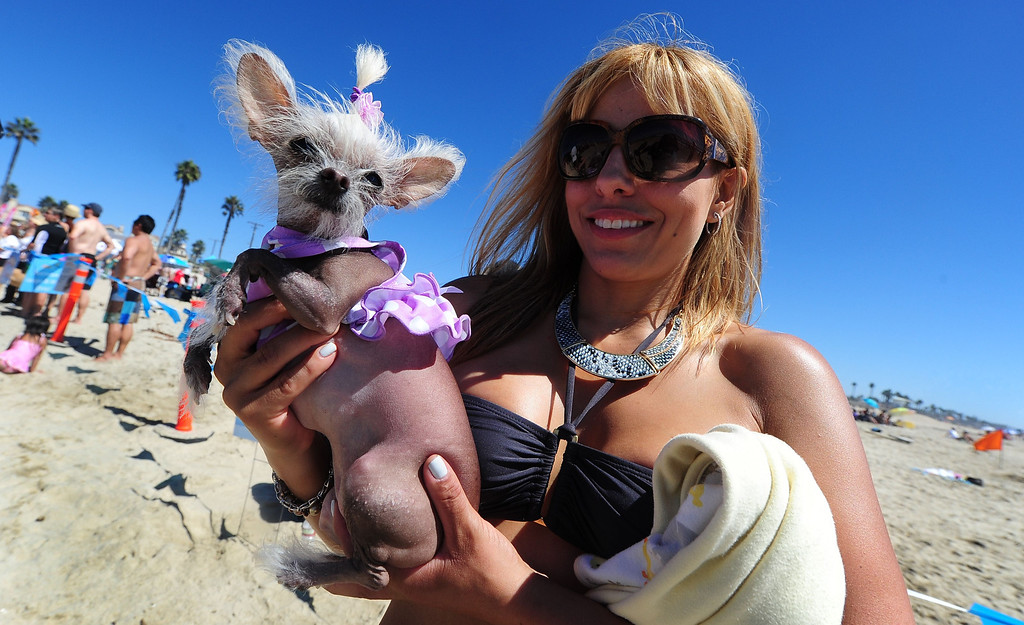 . Spectator Jennifer brought her hairless Chihuahua \'Schmiegelle\' to see the surf dogs at the 5th Annual Surf Dog competition at Huntington Beach, California, on September 29, 2013.  AFP PHOTO/Frederic J. BROWN/AFP/Getty Images
