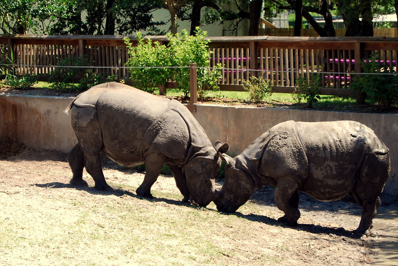 2014 Zoo in Sanford, Florida (13).JPG