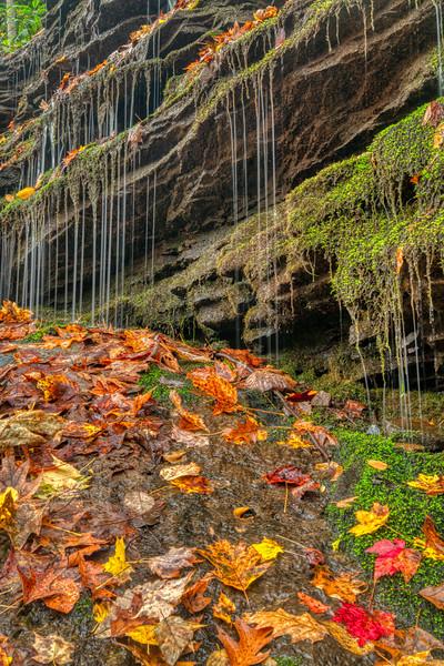 Ohiopyle PA Fall 2019-9.jpg