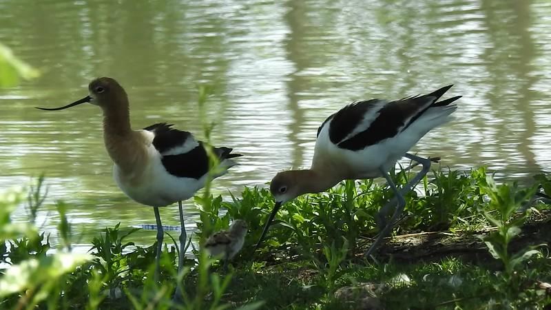 Belmar Birds (14).MOV