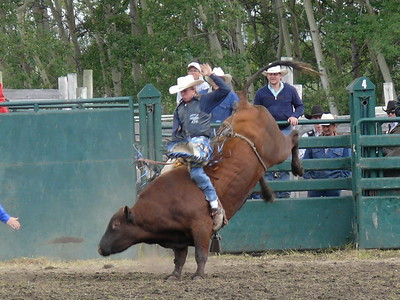 Bull Riding Section 1