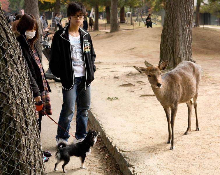 Deer roam free in Nara
