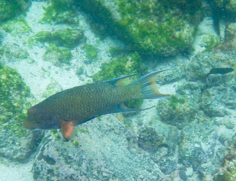 underwater-19-2.jpg