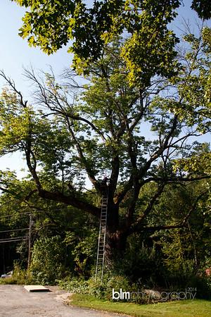 Windy Row Treeworks - Ash Tree in Hancock