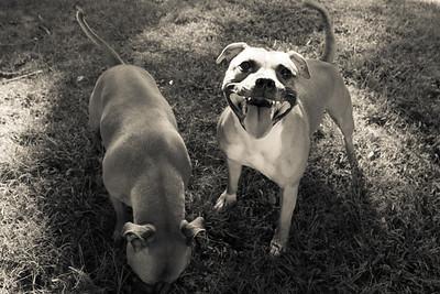 Lou's Pups