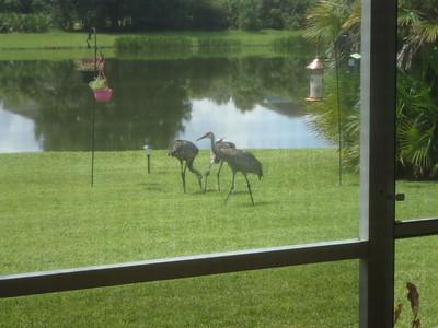 2019.08.09 - Birds in the Back Yard