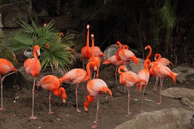 Kaylee Zoo 3-14