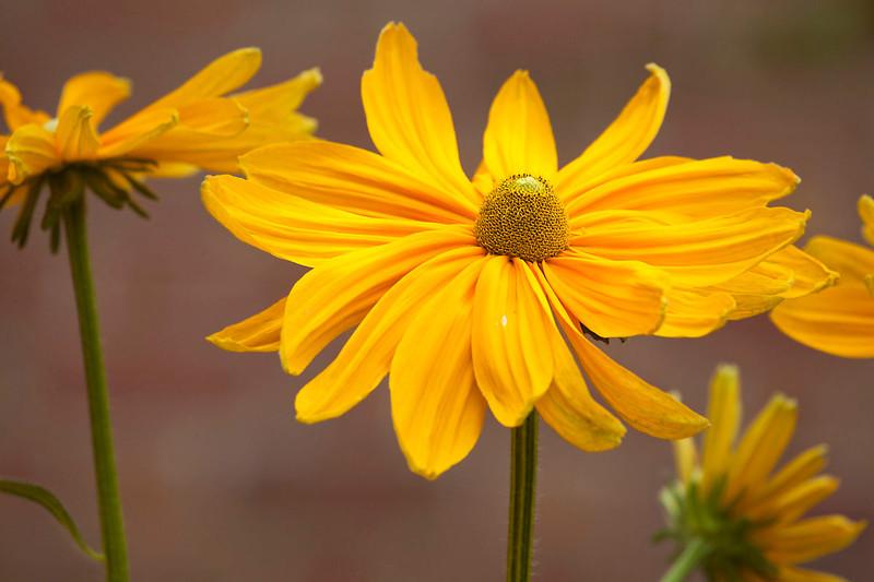 Botanicgarden12-0914.jpg
